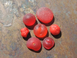 Collection of Lisl's red sea glass buttongs