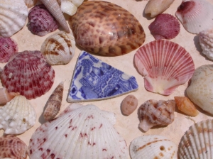 Collected shells and pottery from Florida's Gulf Coast